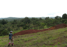 Bauxite prospect in the Bolaven Plateau
